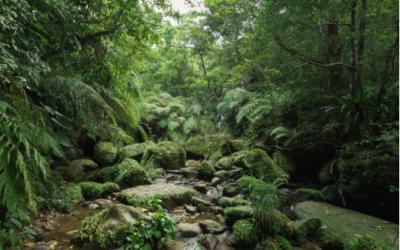 #1 Planter des arbres oui, mais comment ? Au japon, le botaniste Akira Miyawaki propose des solutions